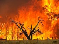 استرالیا غرق در دود و آتش