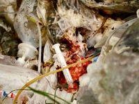 بیمارستانهای متخلف دفع زبالههای پزشکی کدامند؟/ بدهی 2میلیارد تومانی بیمارستانها به شهرداری تهران