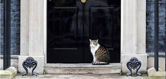 در دفتر نخستوزیر را روی گربه باز کردند +عکس