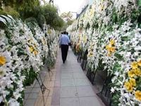 وانت خیریههای گلفروش، درب مساجد را قُرق کردهاند/ هر ساعت کرایه دسته گل حداقل 100 تا 200هزارتومان!