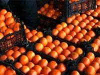 افزایش قیمت پرتقال و نارنگی