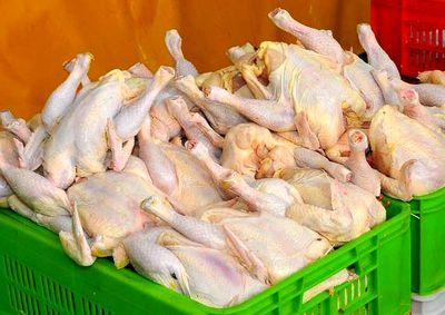 ادامه روند صعودی قیمت مرغ