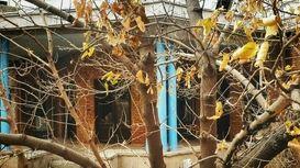 خانه ۲۰میلیارد تومانی نیما یوشیج +فیلم