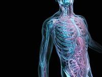 چند موجود زنده در بدن ما زندگی میکنند؟