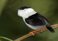 این پرنده، قدرتمندترین موجود جهان است! +عکس