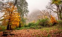 پاییز هزار رنگ جنگلهای هیرکانی گلستان +تصاویر