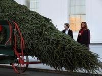 درخت کریسمس به کاخ سفید رسید +تصاویر