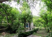 طرح صیانت از باغات باید لایهای از لایههای طرح تفصیلی باشد