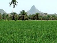 ۱۳میلیارد دلار برای توسعه زیرساخت های کشاورزی اختصاص یافت