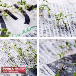روزنامه ای که تبدیل به گیاه میشود