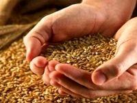 گندم و ذرت در بازارهای جهانی ارزان شد