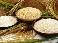 قیمت خرید تضمینی اثری بر بازار برنج ندارد/ خرید توافقی سرنوشت برنج را تعیین میکند