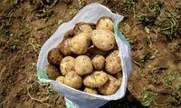 صادرات ۴۰۰کامیون سیب زمینی به عراق