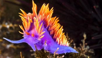 جانواران اعماق اقیانوس را دیده اید! +تصاویر