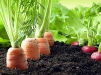 دفاع وزارت جهاد کشاورزی از سلامت محصولات/ برنامه مشترک وزارت جهاد کشاورزی با وزارت بهداشت برای افزایش سلامت محصولات