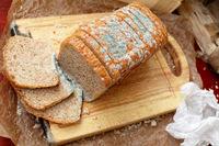 بلایی که کپک نان سر کبد میآورد!