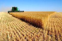 افزایش قیمت خوراک دام و گندم در بازارهای جهانی