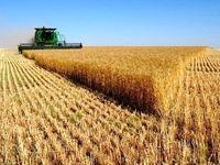 کشاورزان، تنها بازنده قیمت خرید تضمینی/ نگرانی از واردات گندم در سال آینده