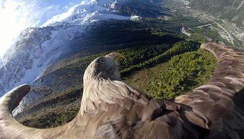 رصد تغییرات آب و هوایی به کمک عقاب دم سفید کوههای آلپ +فیلم