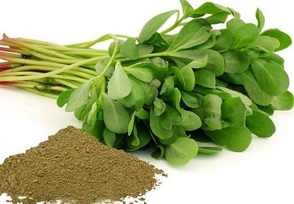 """درمان """"۹۹درد"""" با مصرف این نوع سبزی"""