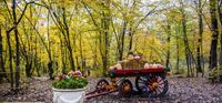 دومین جشنواره پاییز هزار رنگ گرگان +تصاویر