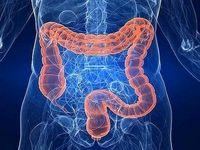 وجود ۴۰۰ نوع میکروب در روده انسان