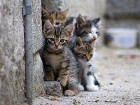گربهها به میل خود به شهر نیامدهاند!