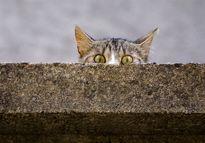 استخدام گربه با حقوق مکفی