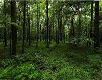 ۳هزار تیم جنگلهای کشور را در نوروز حفاظت میکنند