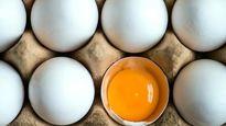 ۷۰۰میلیون تومان جریمه برای دو تولیدکننده تخم مرغ