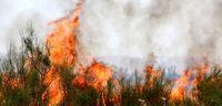 آتشسوزی گسترده در اراضی جنگلی +عکس