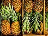 میوههای وارداتی گران شد