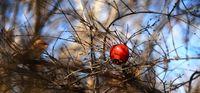 زمستان در باغهای قصردشت شیراز +تصاویر