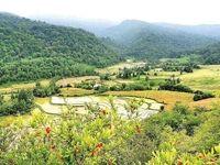 جنگل خواری با بنچاق قاجاری