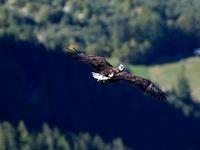 رشته کوه آلپ از چشمهای یک عقاب +عکس