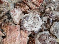 کشف ۱.۵تن گوشت فاسد از پارکینگ منزل مسکونی +عکس