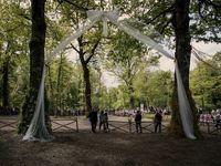 جشن نمادین ازدواج دو درخت تاریخی در ایتالیا +عکس