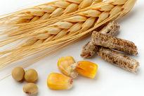 افزایش قیمت خوراک دام