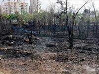 بقایای آتش سوزی شب گذشته پارک چیتگر +تصاویر
