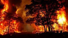 آتشسوزی گسترده در نزدیکی فرودگاه بنگوریون + فیلم