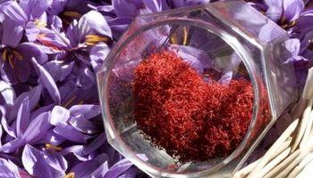 قیمت زعفران در بازار داخلی واقعی نیست/ زعفران ایرانی در بازار جهانی 700تا 1000دلار