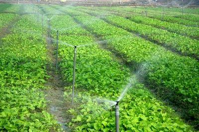 افزایش  ۱۸ درصدی بهره وری آب کشاورزی