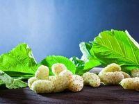 این میوه کوچک و خوشمزه عمرتان را زیاد میکند