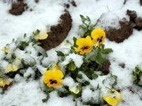 بارش برف تابستانی در ارتفاعات کلاردشت +فیلم