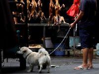 عکسهای باورنکردنی از خوردن گوشت سگ در چین
