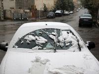 بهار زمستانی در مشهد +عکس
