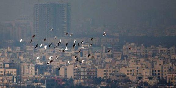 ممنوعیت فعالیت واحدهای آلاینده معدنی و صنعتی از امشب