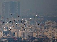 عضو شورا: آلودگی هوای تهران در اثر کوتاهی محیط زیست است!