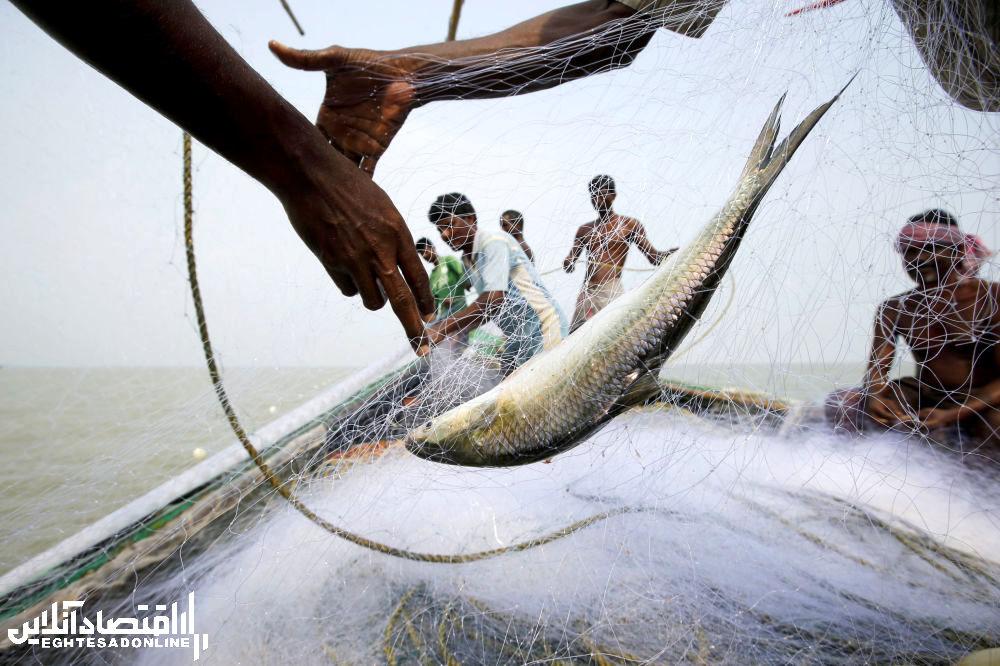 ماهیگیری در ساحل جزیره هندی گورامارا