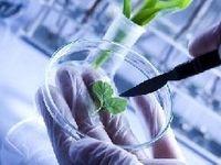 بررسی روشهای کشت بافت گیاهان زارعی و باغی